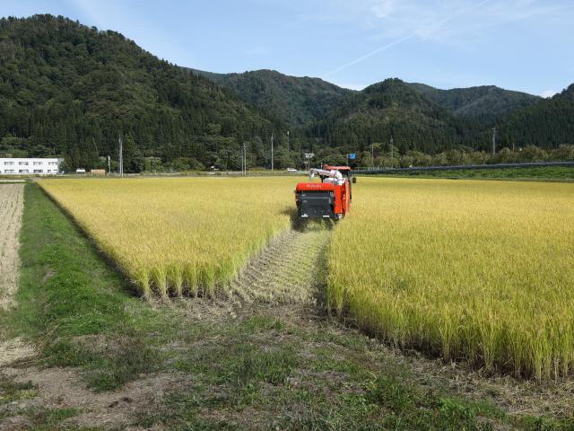 対角線に刈り始める稲刈り